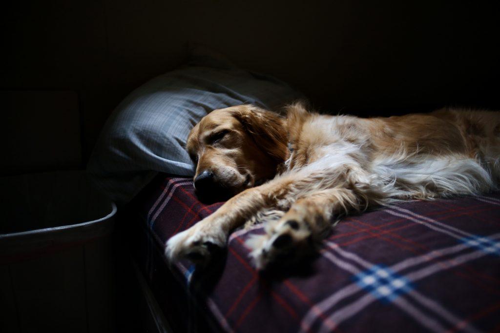 lokalizator dla psa